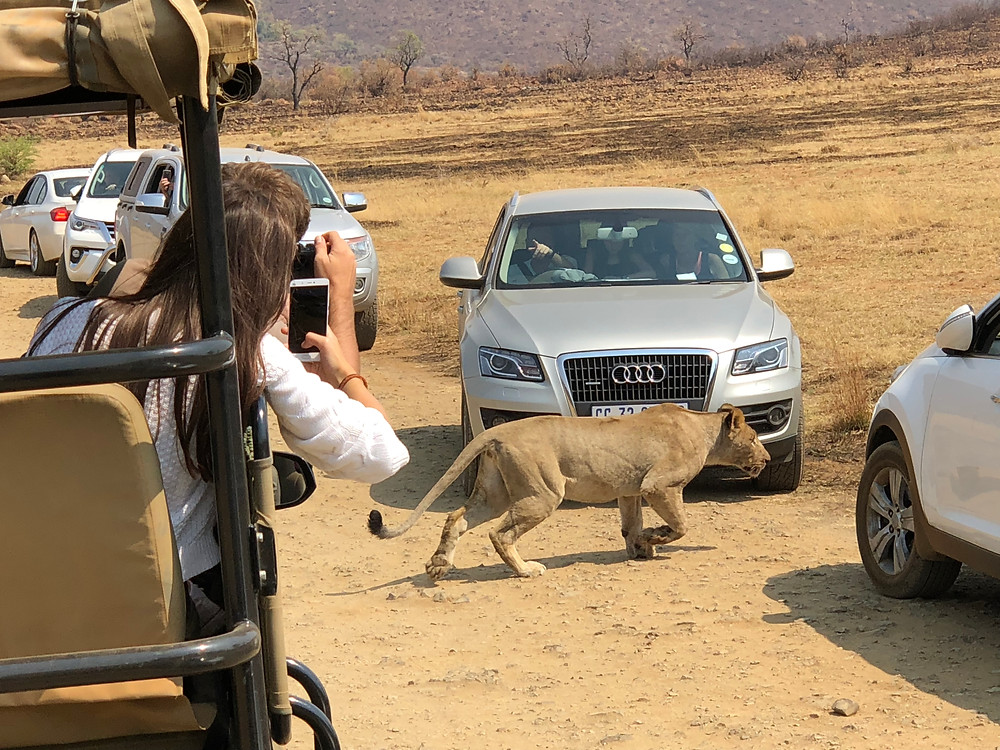 Safari Pilanesberg Pra onde Ir Agora?