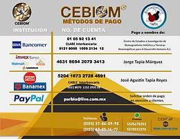 banco9000.png