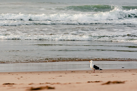 Torrance Beach, CA