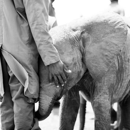 David Sheldrick Elephant and Rhino Nursery