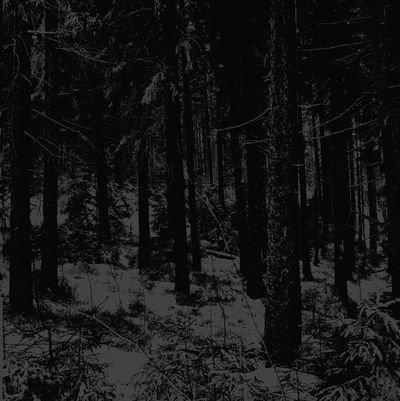 """MOLOCH """"Abstrakter Wald"""""""