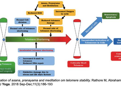 Hälsa mätt i Telomerernas stabilitet