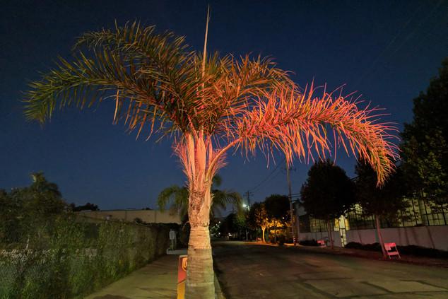 Palm Tree, Emeryville, California