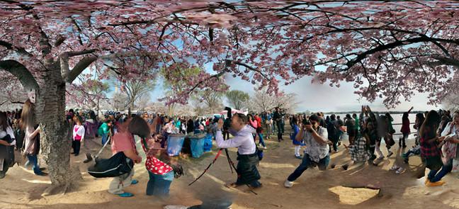 National Cherry Blossom Festival No. 2 T