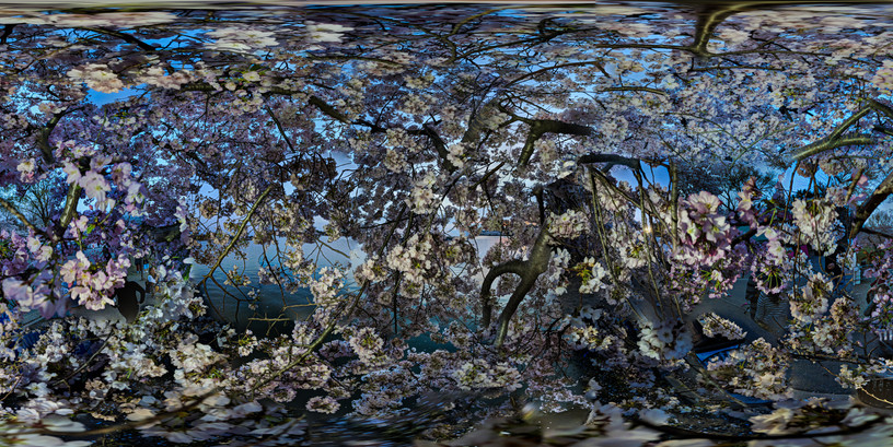 Cherry Blossoms No. 4, Tidal Basin, Wash