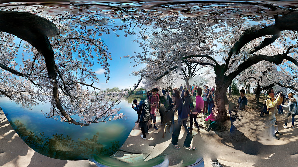 National Cherry Blossom Festival, Tidal Basin, Washington, DC