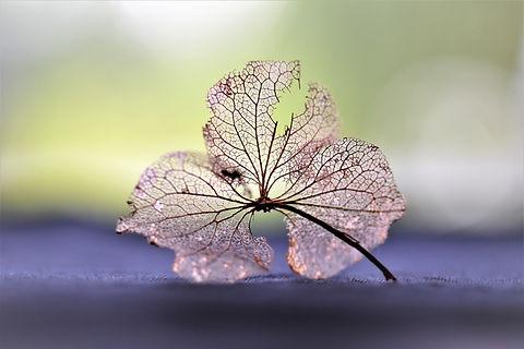 dry-flower-2541619.jpg