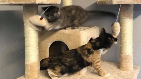 kittens on tree_edited_edited.jpg