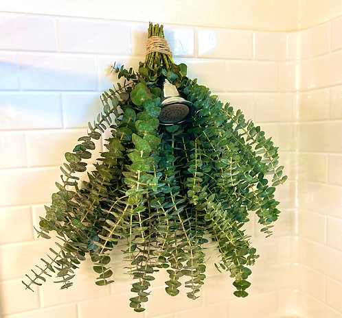 Eucalyptus Bundle (US Shipping Available)