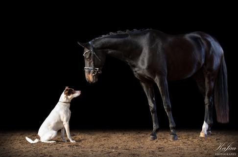 Stute Sherry Dance und Hund Chico von Sarah