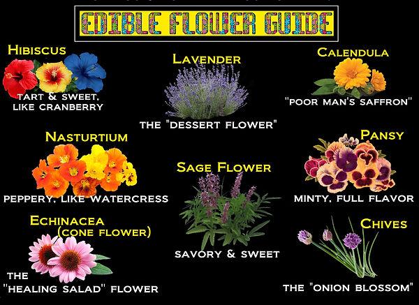 edible flower guide.jpg