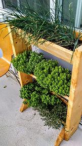 Vashty's Vertical Plants 2.jpg