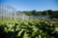 worten organic farm (5).jpg