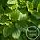 Thumbnail: Herbal Lip Balm w/s