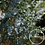 Thumbnail: Eucalyptus & Lime Mineral Soak w/s