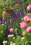Tulips and pot accent garden