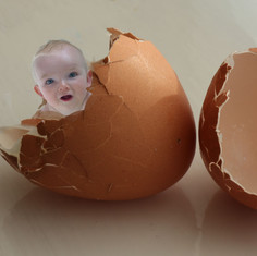 hatching baby