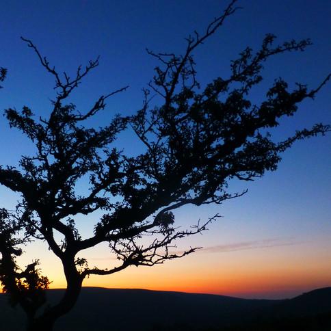 hollow tor sunset
