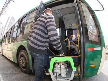 É permitido transportar animais de pequeno porte em ônibus em São Paulo