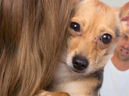 Em caso de separação, quem fica com a guarda do animal de estimação?