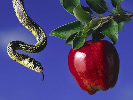 O uso do fruto proibido - A prova ilícita e sua aplicação