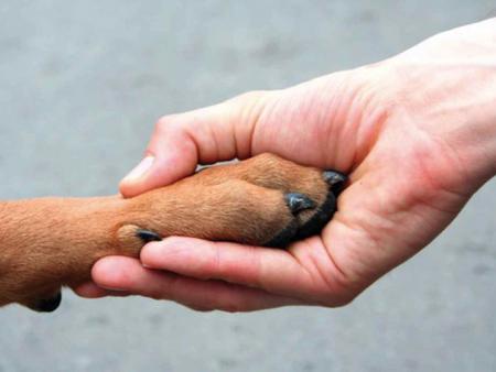 Legitimidade da Defesa Animal