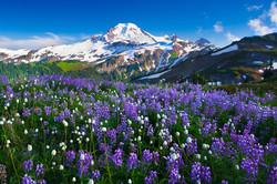 Flowers on Mt. Baker