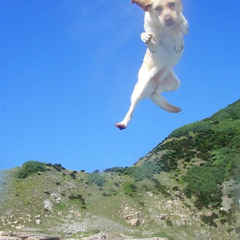 jumping dog.jpg