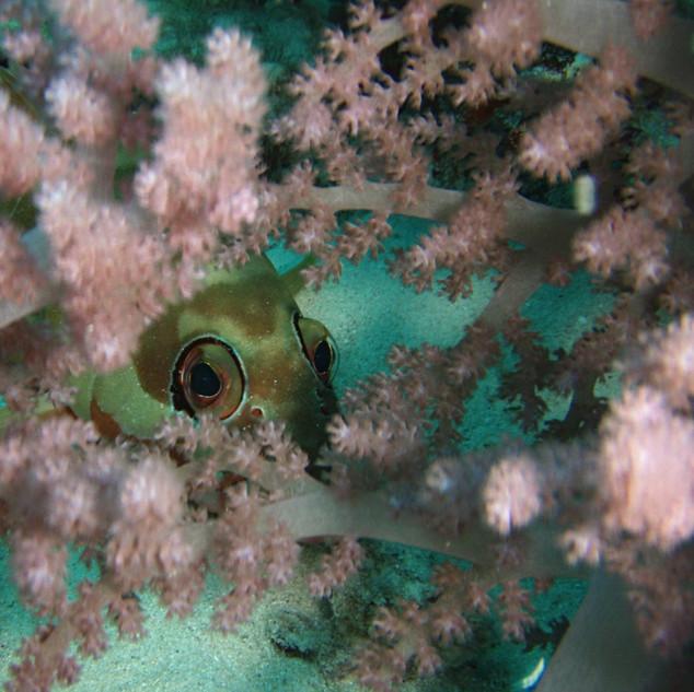 soft coral.jpg