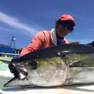 yellofin tuna.JPG