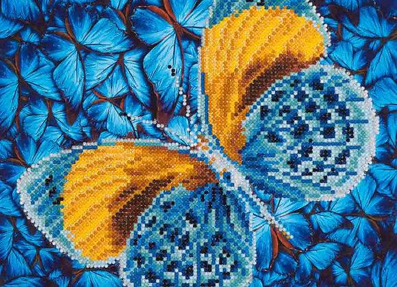 Flutter by Gold