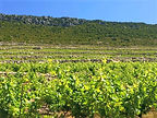 Peljesac wine tour from Dubrovnik by Dub