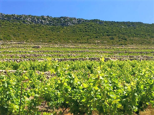 Trips from Dubrovnik, wine tour