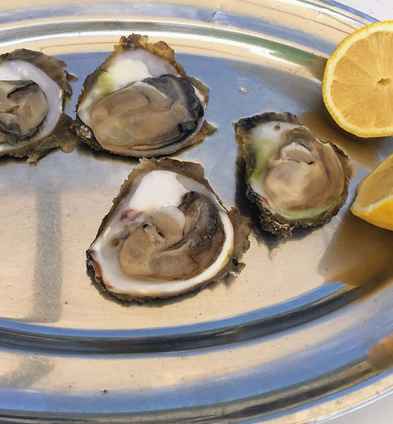 Experiences in Dubrovnik, Oysters degustation