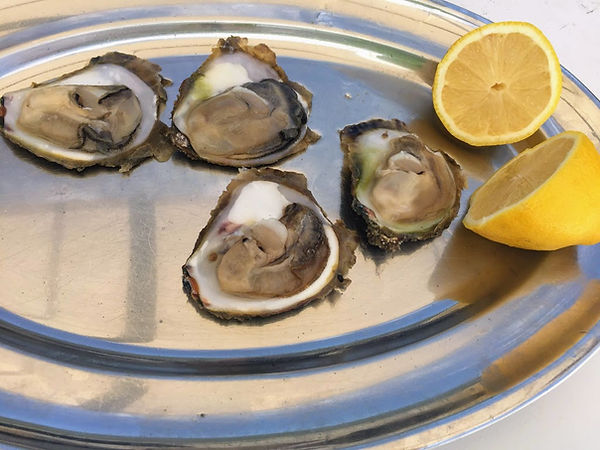 Oysters and wine tour from Dubrovnik