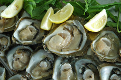 Oysters and wine half day trip