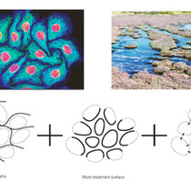 Cells as Design Language