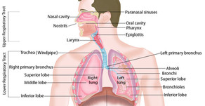 Case History- Sinus & Respiratory Problems