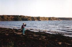 web fall beach 3