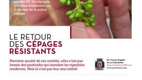 The Mag - Le retour des cépages résistants