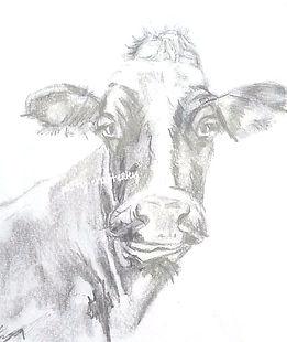 cow%20sketch_edited_edited_edited.jpg