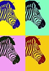 zebra a5.jpg