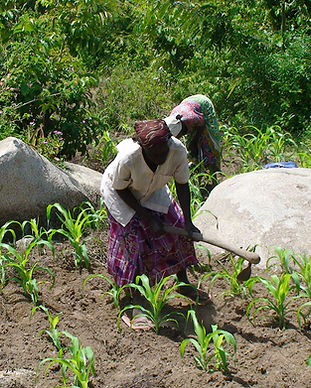 woman_farming_900x900-1.jpg
