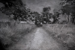 Walking Down Memory Lane OCC-2372