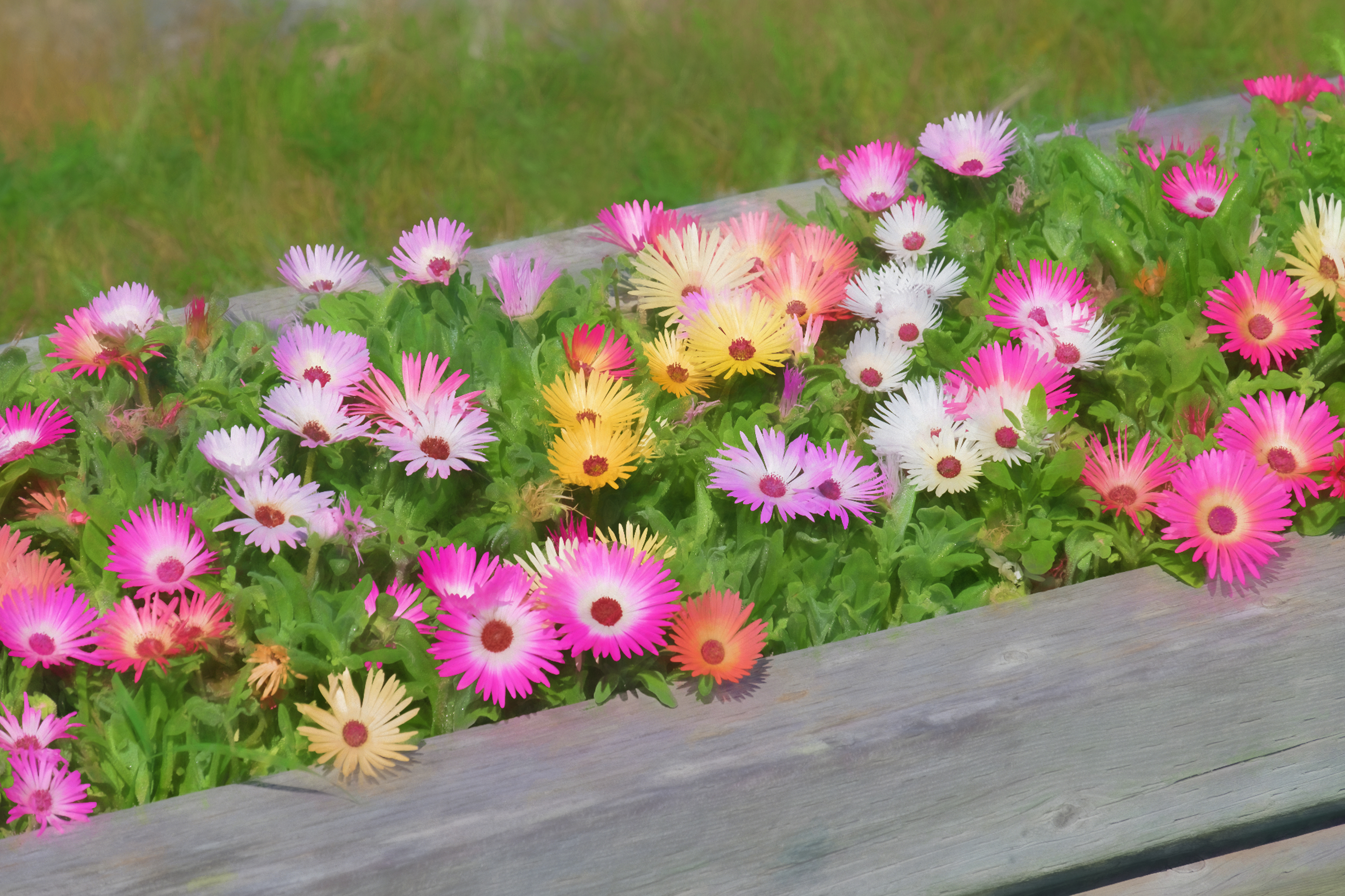 Old Day's Pond Flowers-