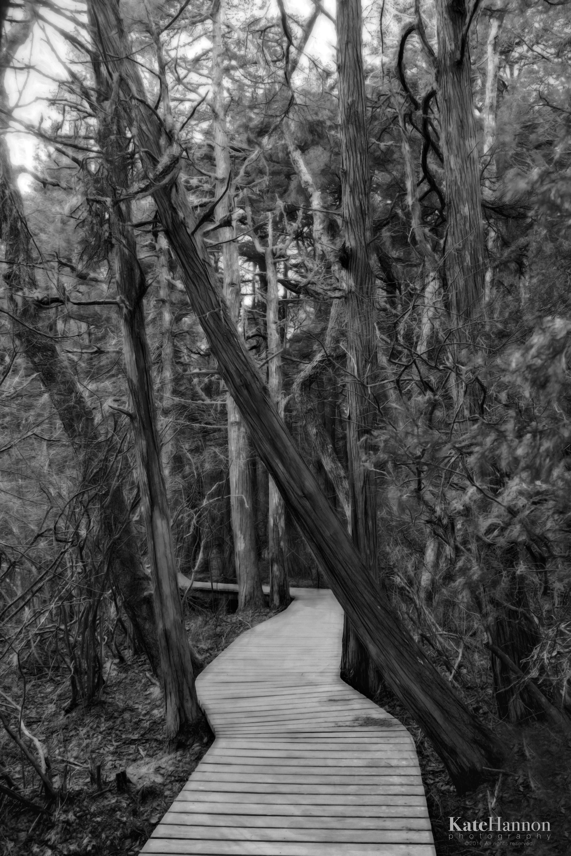 White Cedar Swamp Trail