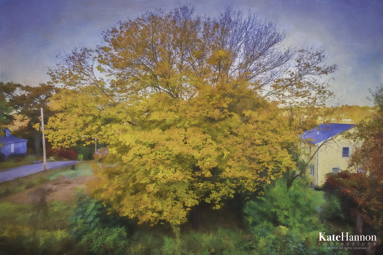 The Tree 27 Oct 2015