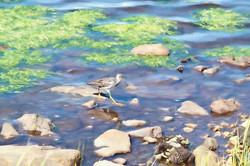 Birding on the Bonavista Boardwalk-