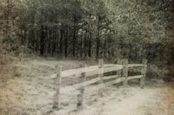 Dirt Road Dream OCCMarch-4106