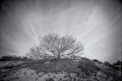 Province Lands Tree